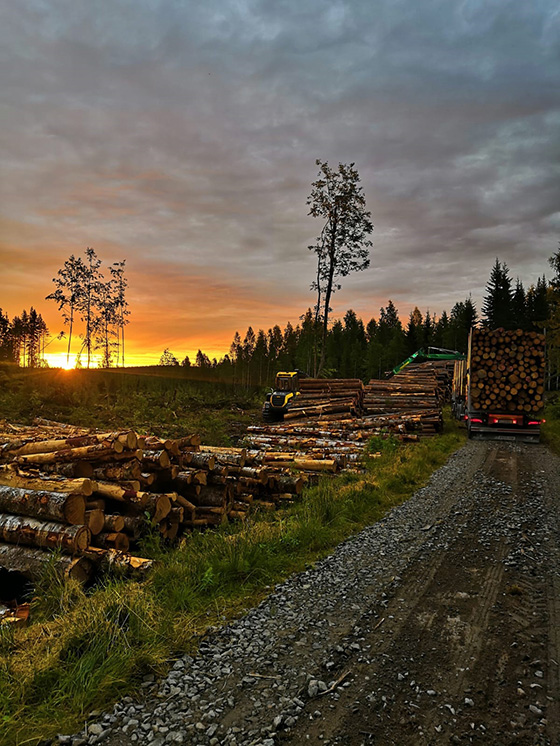 Piled logs on the side of the road at sunset